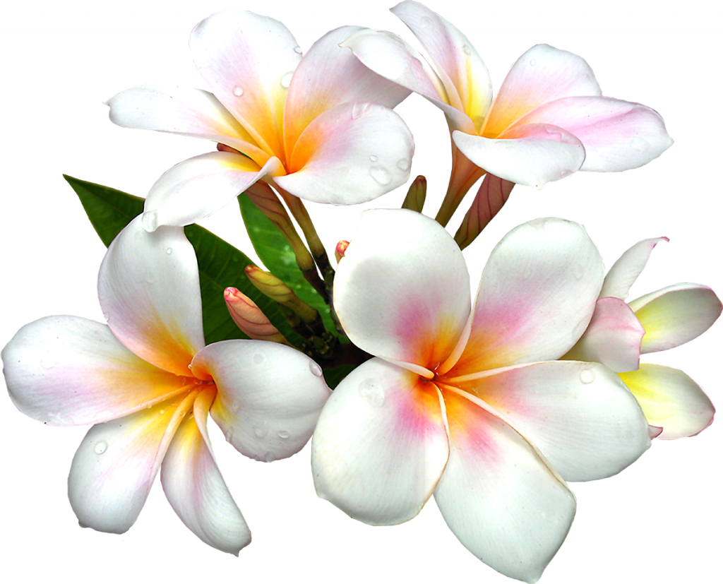 Exotic-Flowers_090.png